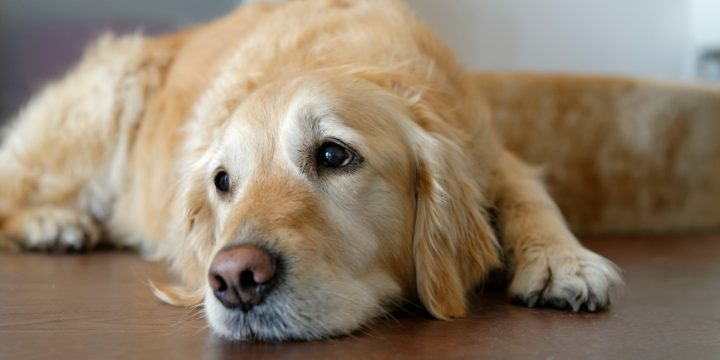 Key Points To Keep In Mind About CBD Oil For Dogs